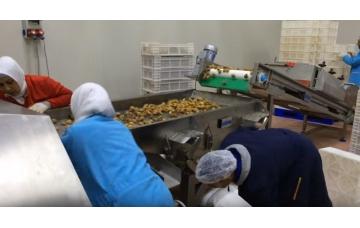 Dökme Gıdaların Mikrodalga ile Kurutulması, Sterilizasyonu, Fumigasyonu