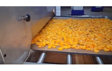 Drying Apricots with Industrial Microwave Tunnel Oven - DKİ Machinery